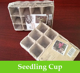 Seedling Cup